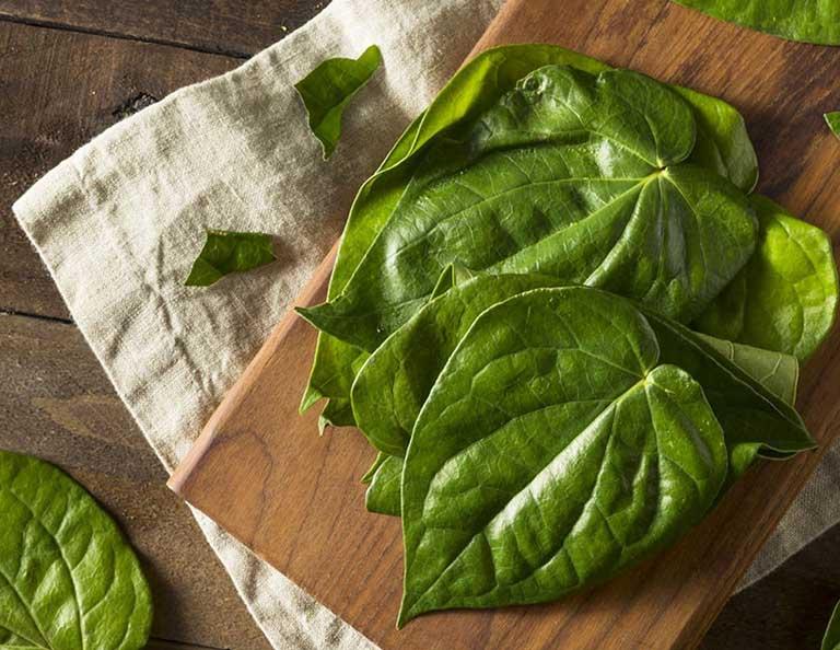 Y học cổ truyền nói rằng lá trầu có vị cay nồng, tính ẩm
