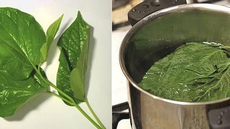 Lá trầu không ngoài dùng để ăn thì còn có tác dụng chữa bệnh nhờ vào đặc tính tán hàn, khu phong, trị ngứa ngáy hiệu quả
